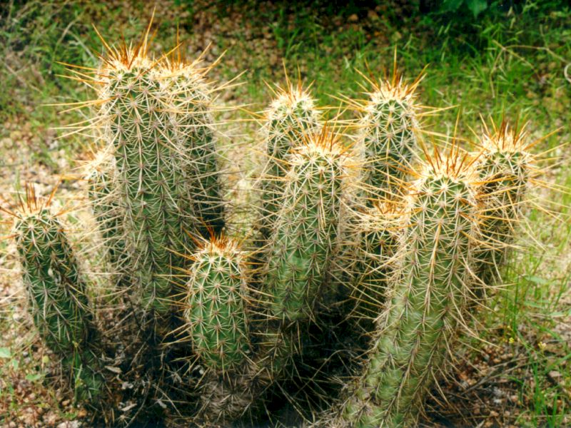 Cactuses Blog Title